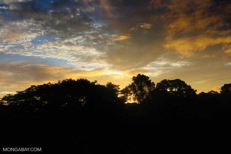 The Amazon rainforest at dusk