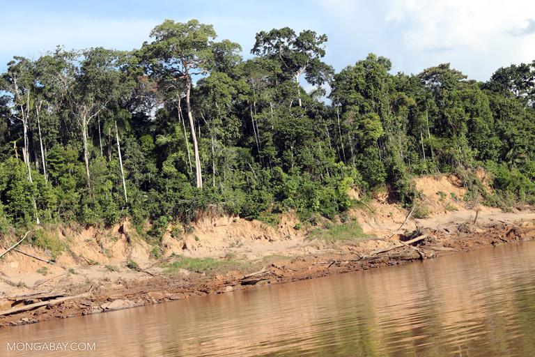 Tambopata rainforest