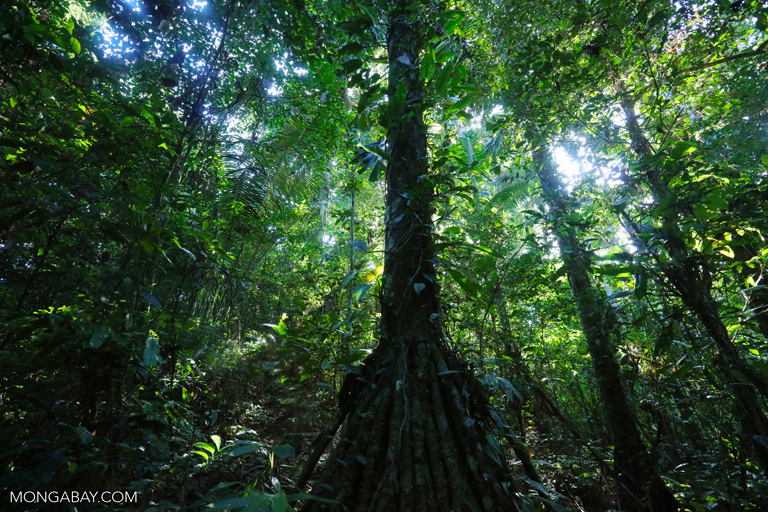 Rainforest in the Peruvian Amazon