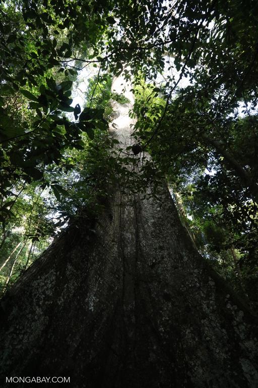 Rainforest in the Peruvian Amazon