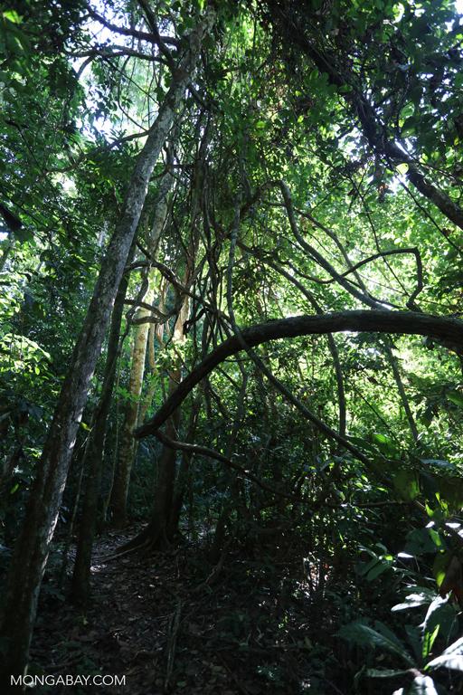 Amazon rainforest understory