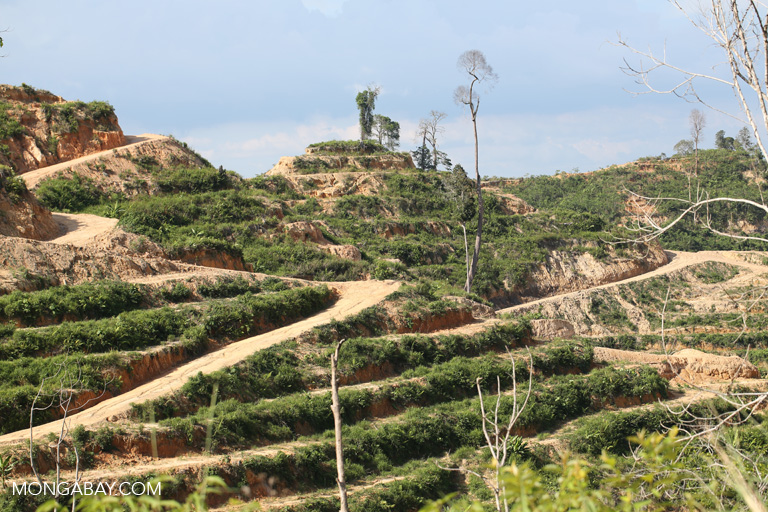Oil palm plantation in Sarawak