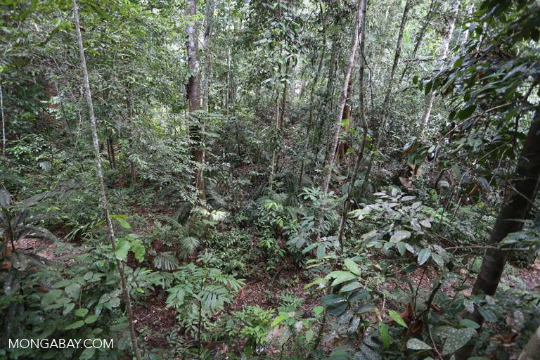 Rainforest in Sarawak
