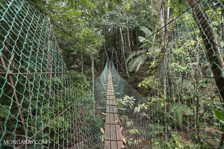Canopy walkway in Sarawak