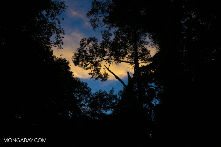 Sunset in the rainforest