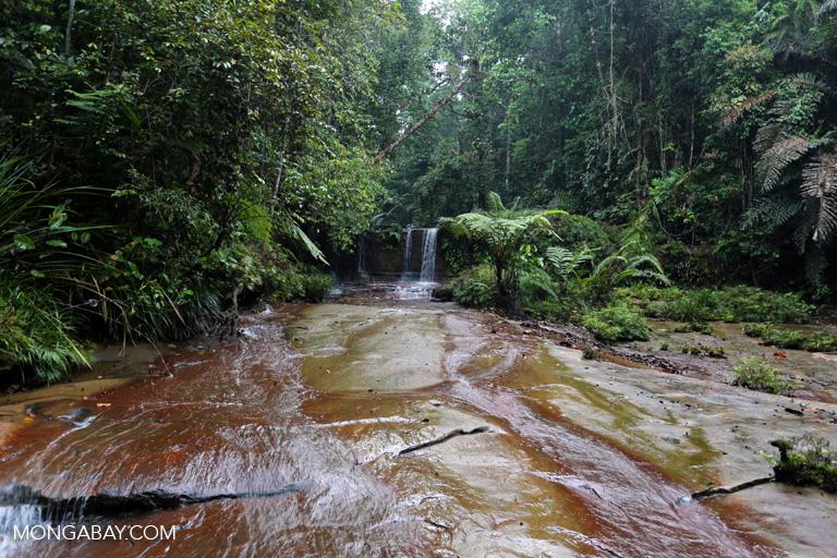 Waterfall in Lambir Hills NP