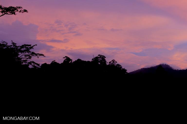 Rainforest sunset