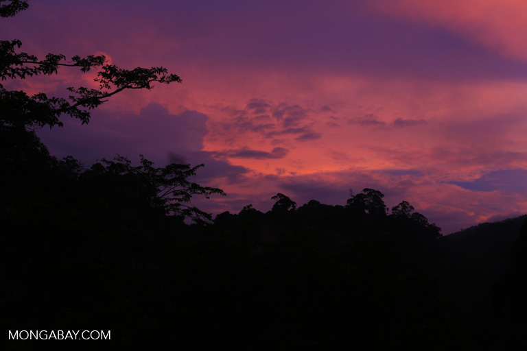 Rainforest sunset