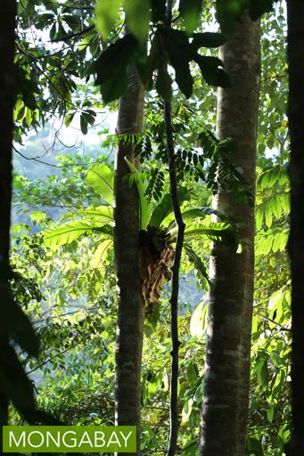 Epiphyte in Sarawak