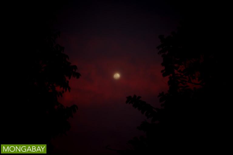 Moon over the rainforest