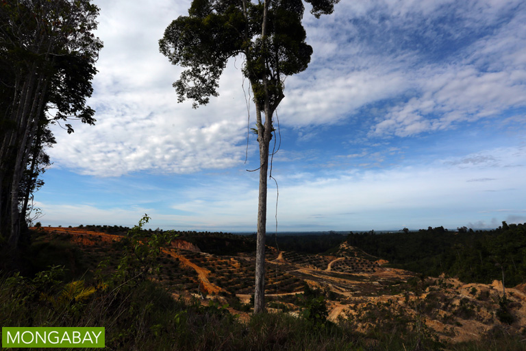Forest cleared for palm oil in Sarawak