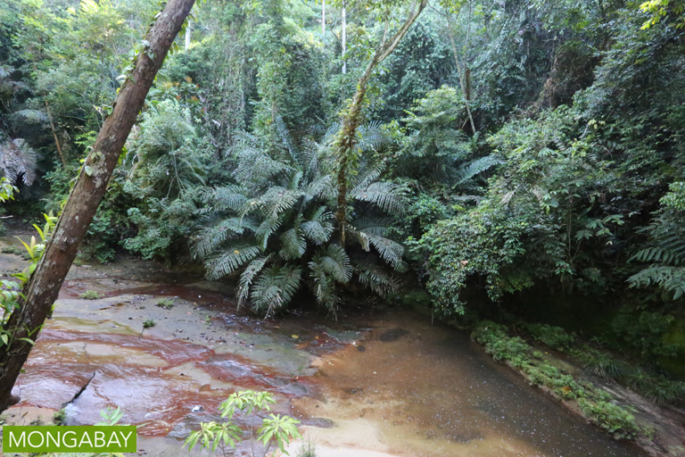 Creek in Lambir Hills
