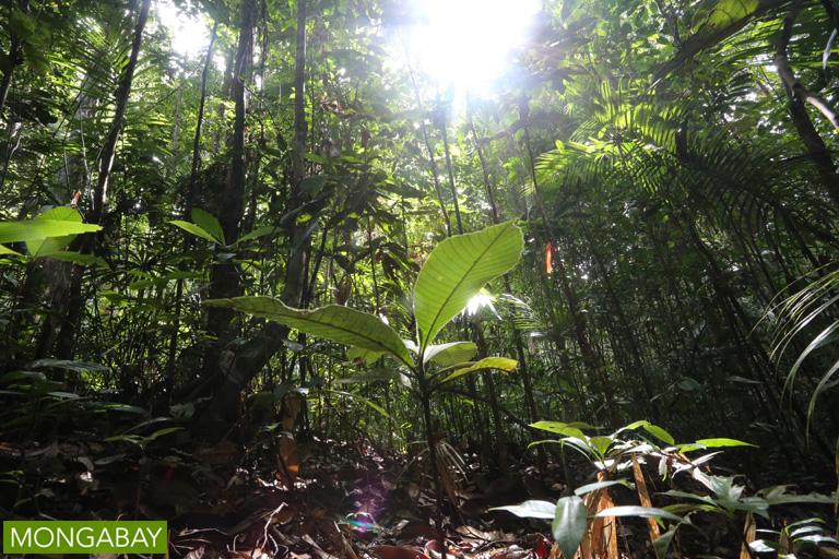 Rainforest floor