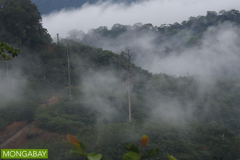 Oil palm plantation in Sarawak