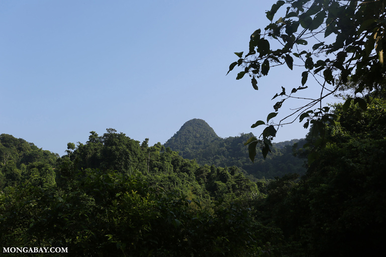 Forested karst in Cuc Phuong National Park