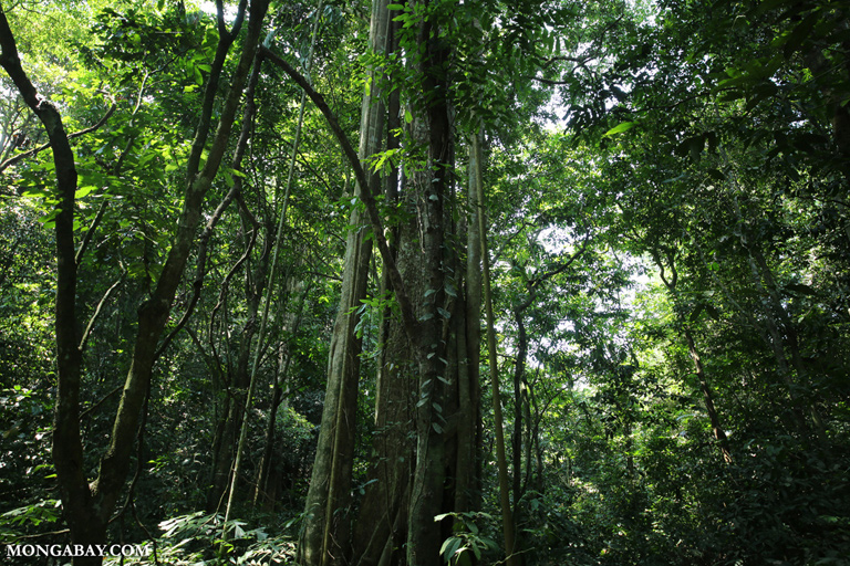 Rainforest in Cuc Phuong National Park