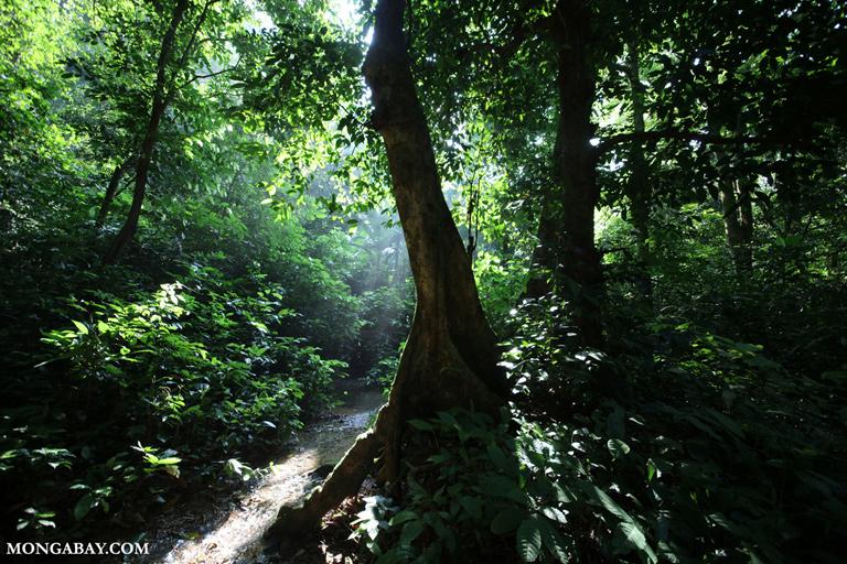 Creek in Cuc Phuong rainforest