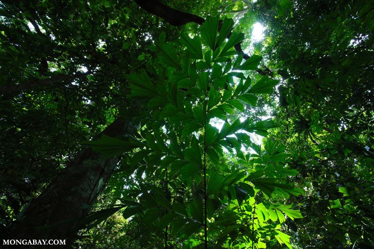 Cuc Phuong rainforest