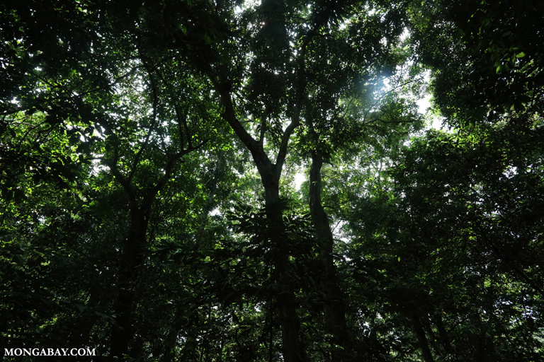 Cuc Phuong rainforest