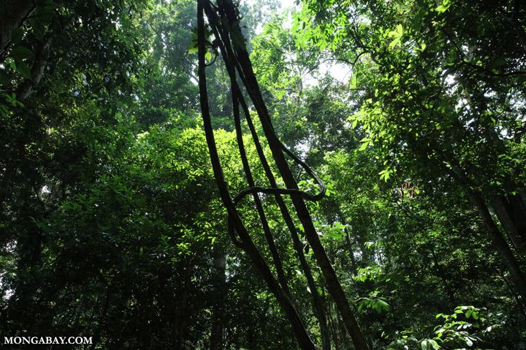 Rainforest in Vietnam