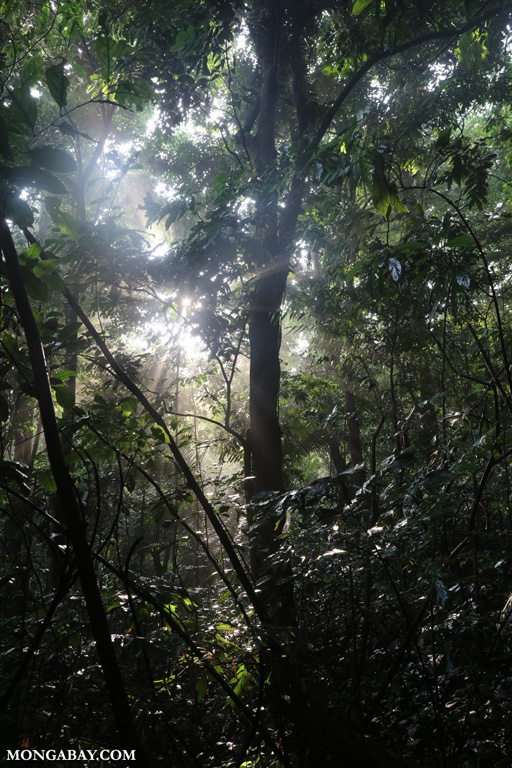 Morning in Cuc Phuong rainforest