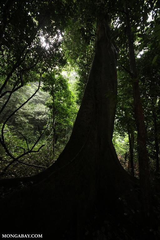 Vietnam's karst forest