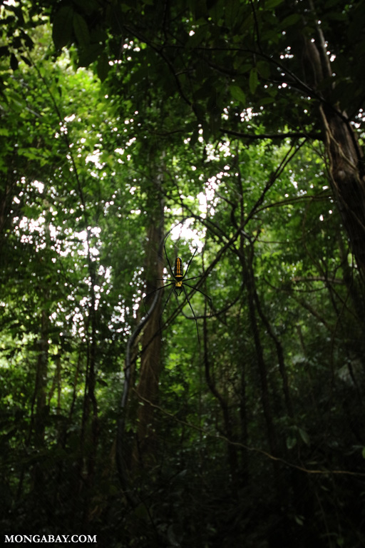 Rainforest in Vietnam's Cuc Phuong