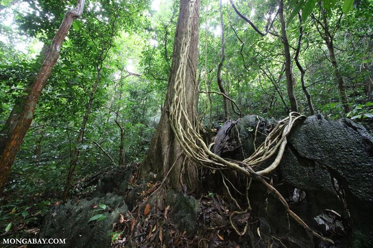 Vietnamese karst forest