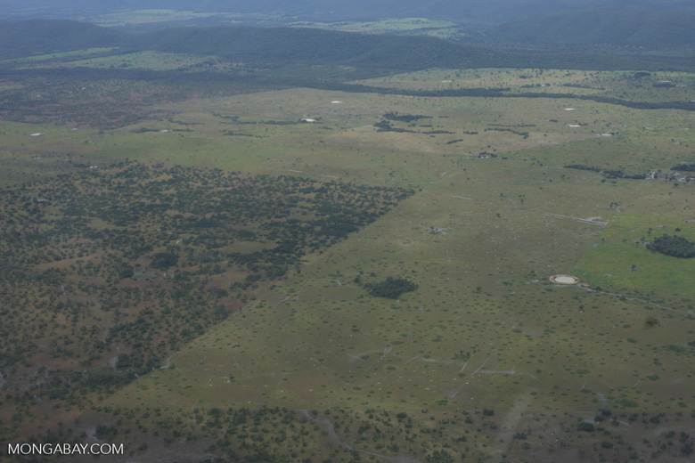 Cerrado grassland cleared for cattle pasture