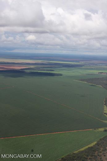 Soy fields in the Amazon