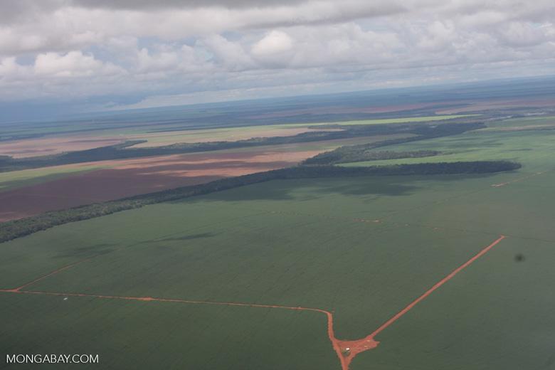 Soy fields in the Amazon [brasil_015]