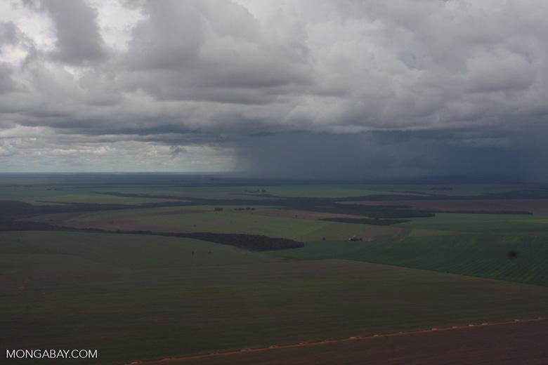 Soy fields in the Amazon [brasil_018]
