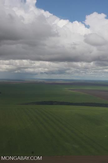 Soy fields in the Amazon [brasil_025]