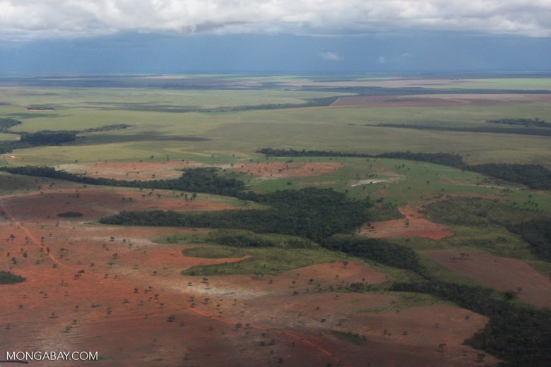 Conversion of transition forest in the Brazilian Amazon