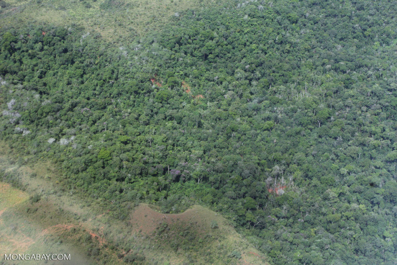 Conversion of transition forest in the Brazilian Amazon [brasil_032]