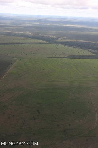 Recently cleared cerrado in Brazil [brasil_040]