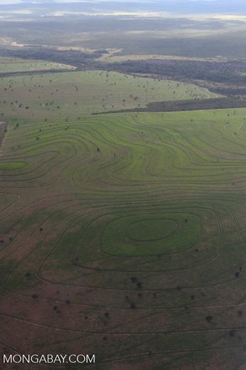 Recently cleared cerrado in Brazil