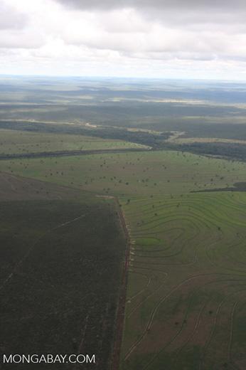 Recently cleared cerrado in Brazil [brasil_043]