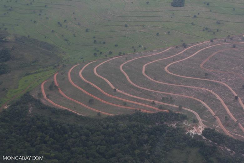 Recently cleared cerrado in Brazil [brasil_054]