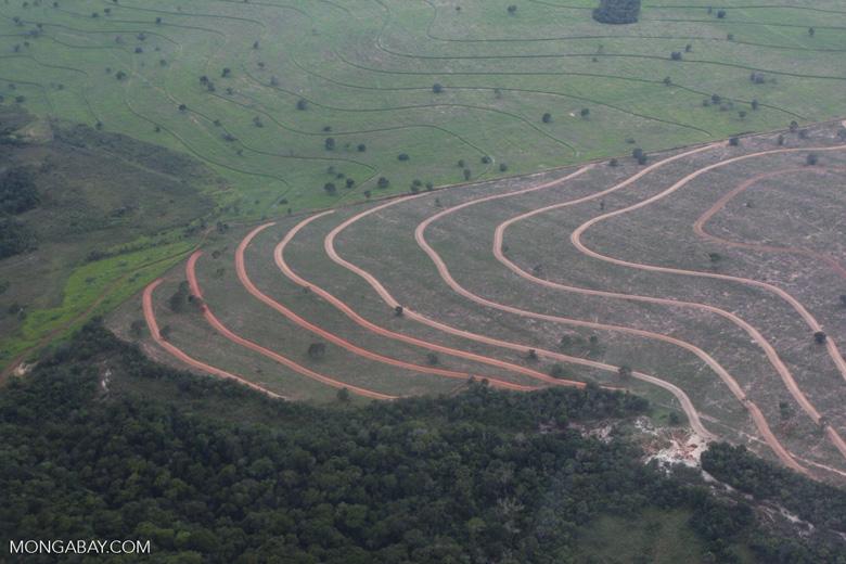 Recently cleared cerrado in Brazil [brasil_055]