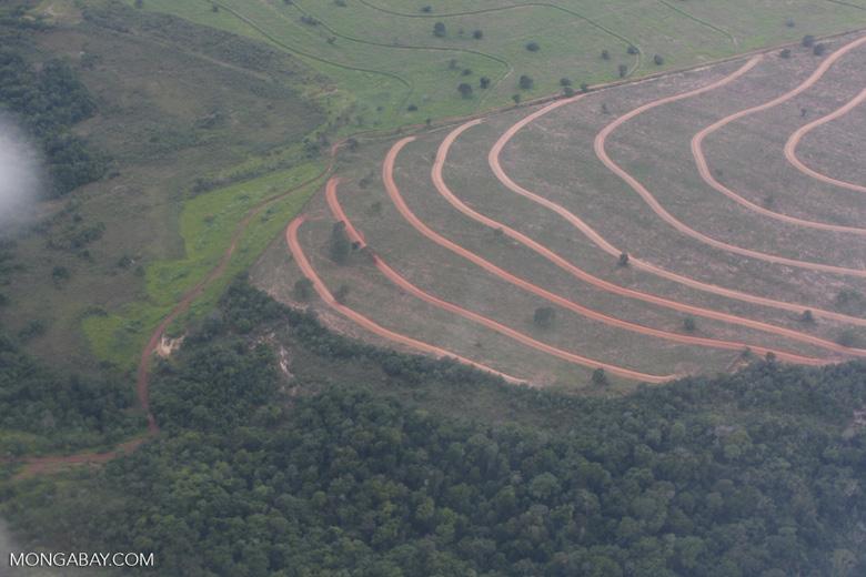 Recently cleared cerrado in Brazil [brasil_057]