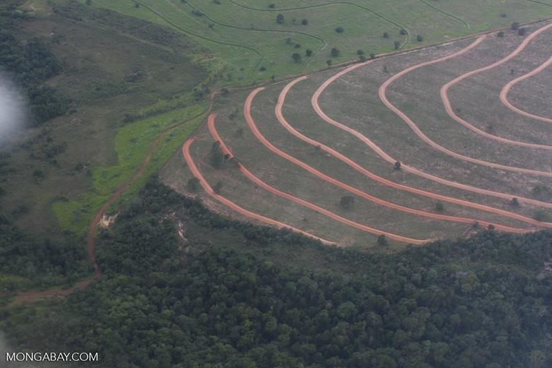 Recently cleared cerrado in Brazil [brasil_058]
