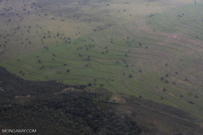 Recently cleared cerrado in Brazil [brasil_059]