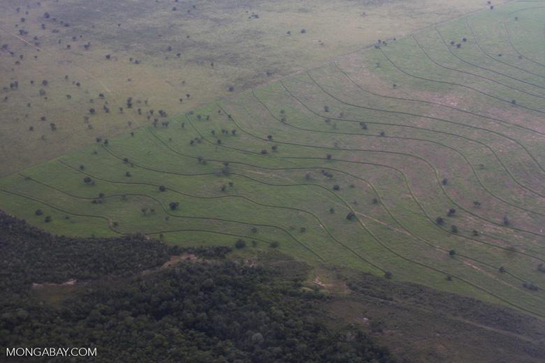Recently cleared cerrado in Brazil [brasil_061]