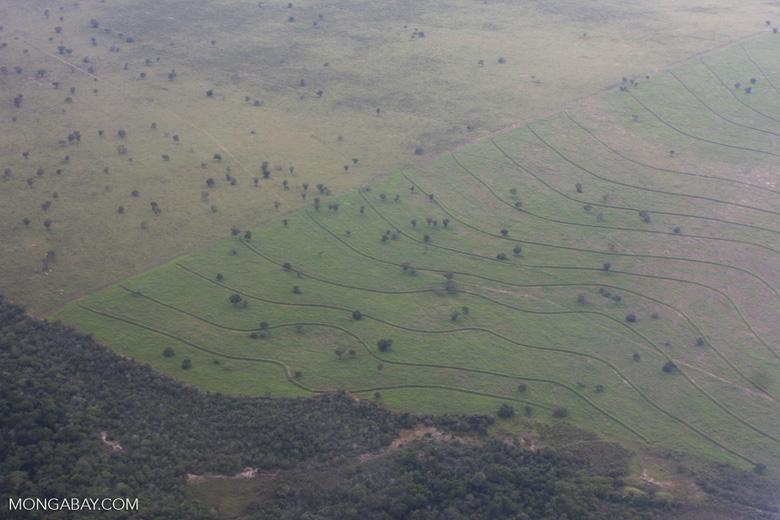 Recently cleared cerrado in Brazil [brasil_062]
