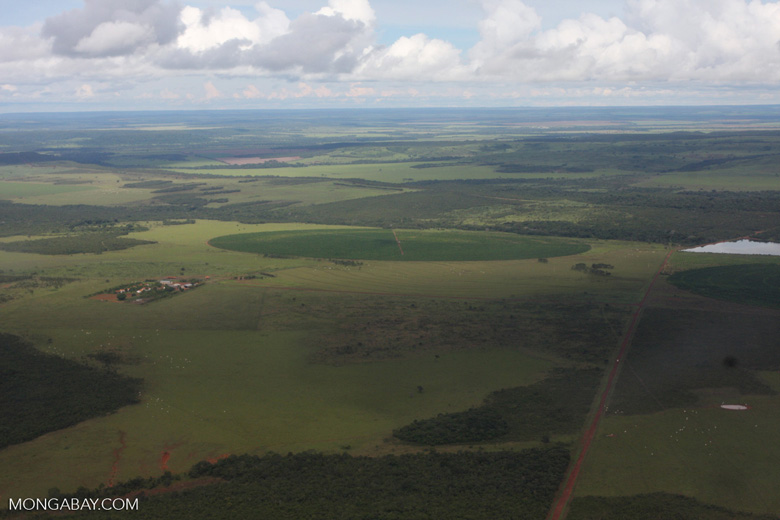 Intensive agriculture in the Brazilian Amazon