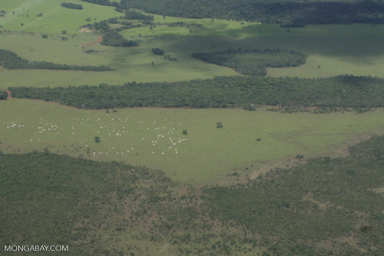 Cattle ranching in the Brazilian Amazon [brasil_073]