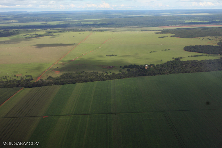 Soy field adjacent to Amazon transition forest