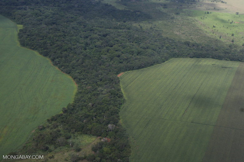 Legal forest reserve on a mechanized soy farm in the Brazilian Amazon