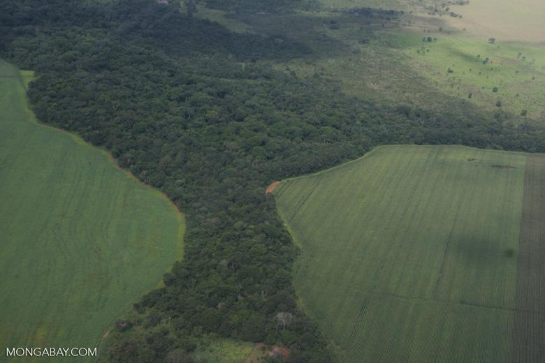 Legal forest reserve on a mechanized soy farm in the Brazilian Amazon [brasil_095]